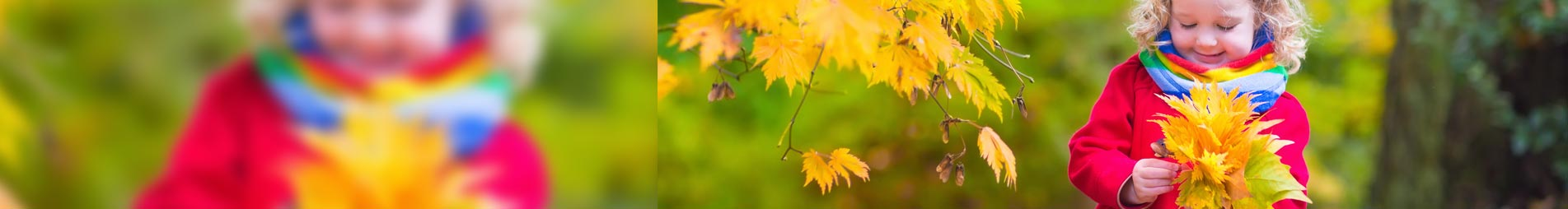 family law edinburgh services